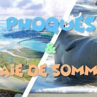 Découvertes des Phoques sauvages & Baie de Somme
