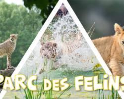 Découverte du Parc des Félins - DAY TRIP - ultra promo 29,99€