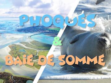 Découverte des Phoques sauvages & Baie de Somme