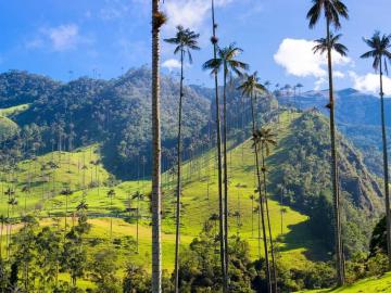 Voyage de rêve Colombie - Bogota, Medellin & Vallée Cocora