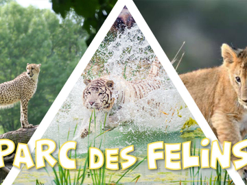 Découverte du Parc des Félins - 24,9€ PROMO