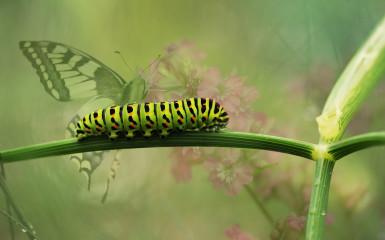 """""""Omida face toată treaba, dar fluturele primește toată publicitatea."""""""