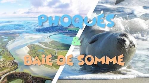 Découvertes des Phoques sauvages & Baie de Somme 21 juillet