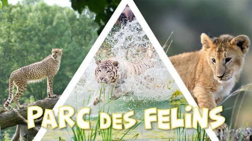 Découverte du Parc des Félins - DAY TRIP 24,9€ - Promo