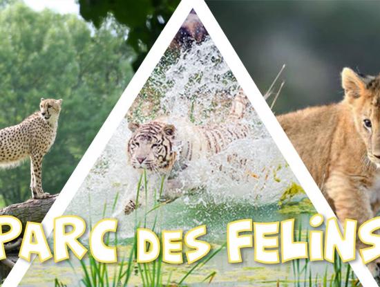 Découverte du Parc des Félins
