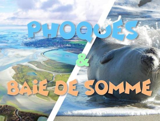 Découverte des Phoques sauvages & Baie de Somme - 26 septembre